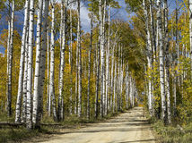 Aspen Alley Wyoming Image libre de droits