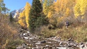 Aspen autumn scene stock video