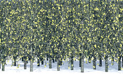 Aspen-Bäume Lizenzfreie Stockfotografie