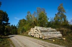 Aspen-Bauholzstapel durch Straßenrand Stockfotos