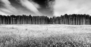 Aspen-Baum Lizenzfreie Stockfotografie