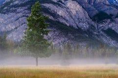Aspen-Baum vor Berg mit Nebel Lizenzfreie Stockbilder