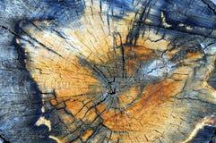 Aspen-Baumstumpfabschluß oben lizenzfreies stockfoto