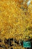 Aspen City Limit. Portrait orientation of Aspen city limit sign with golden aspen trees in copy space Royalty Free Stock Photos