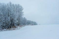 Aspen Clone - prima neve al bordo fotografia stock libera da diritti