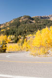 Aspen color at bend in the road Stock Photography