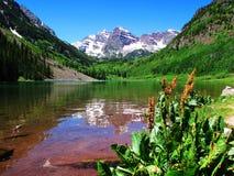 Aspen colorado Fotografie Stock