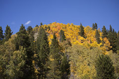 Aspen Covered Mountain Image libre de droits
