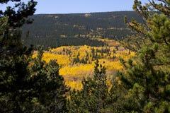 Aspen Covered Mountain Framed sörjer förbi träd Arkivfoto