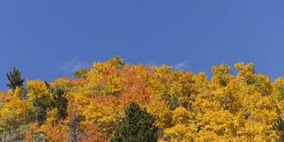 Aspen Covered Mountain und blauer Himmel Stockfotografie