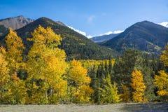 Aspen deja el torneado de oro, anaranjado y amarillo en las montañas de Colorado durante caída fotografía de archivo
