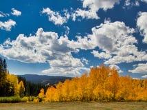 Aspen et nuages photographie stock libre de droits