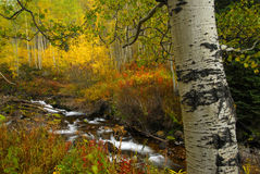 Aspen in Fall. Aspen and stream in the high country of Colorado stock photos