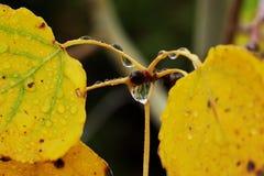 Aspen Fall Rain 2 Lizenzfreies Stockbild