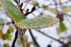 Aspen Fall Rain 4 Lizenzfreies Stockfoto