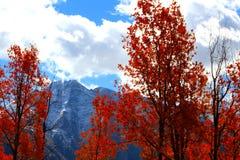 Aspen Fire stock photos