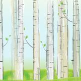 Aspen forest background Stock Images