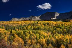 Aspen forest and mountain views stock images