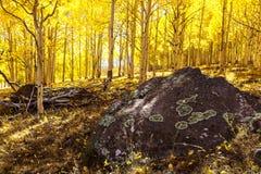 Aspen Forest Utah Arkivbild