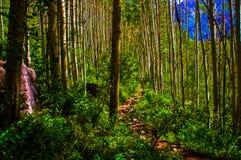 Aspen Forests Trail leder till vildmarkaffärsföretag arkivbild