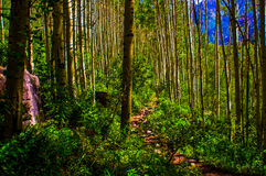Aspen Forests Trail mène aux aventures de région sauvage photographie stock