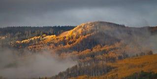 Aspen Gold y niebla en madrugada fotografía de archivo libre de regalías