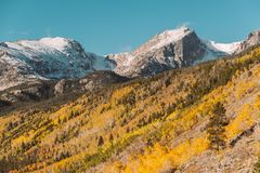 Aspen grove at autumn in Rocky Mountains Stock Photos