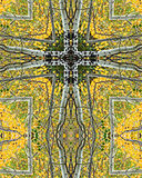 Aspen grove cross2. Kaleidoscope cross from photo of aspen grove, Colorado Royalty Free Stock Photo
