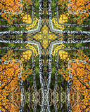 Aspen grove cross4. Kaleidoscope cross from photo of aspen grove, Colorado Royalty Free Stock Photography