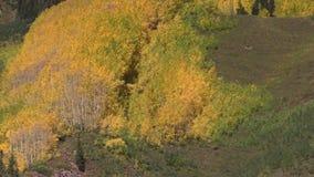 Aspen Grove en caída metrajes