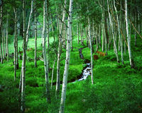 Aspen Grove Ranch, Maroon Bells, Colorado Stock Photos