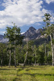 Aspen Grove and view of San Juan Mountains, Hastings Mesa, Ridgway, Colorado, USA stock photos