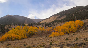 Aspen Hill. Fall colors cover this hillside outside of Bishop Ca Royalty Free Stock Photos