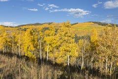 Aspen Hillside dourado imagem de stock royalty free