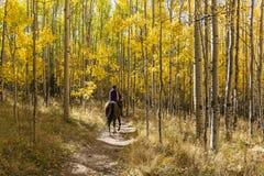 Aspen Horse Trail dorato Fotografia Stock