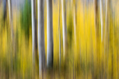 Aspen Impressions Royalty Free Stock Photography