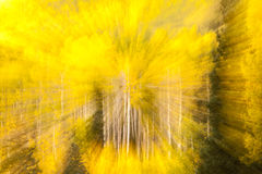Aspen Kaleidoscope Stock Photography
