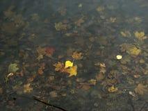 Aspen lämnar att sväva på vattnet mot bakgrunden av s fotografering för bildbyråer