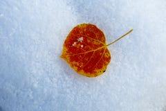 Aspen Leaf. Autumn aspen leaf on fresh snow Royalty Free Stock Photography