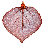 Aspen leaf in copper Royalty Free Stock Photography