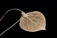 Aspen Leaf Necklace. Gold-plated aspen leaf necklace on a chain against black background Stock Photo