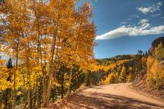 Aspen Leaves Changing Color Arkivbilder