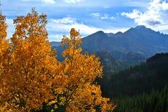 Aspen Leaves coloreado caída en Rocky Mountain National Park imagenes de archivo