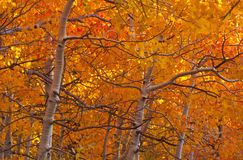 Aspen Light Stock Photography