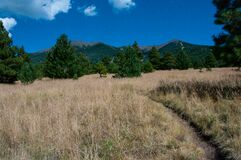 Aspen Loop Trail No. 73 Royalty Free Stock Images