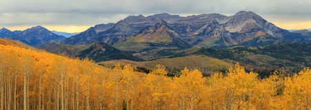 Aspen medley in the Wasatch Mountains. Stock Image