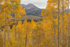 Aspen morning in the Wasatch Mountains. Stock Photo