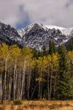 Aspen no outono ao longo da via pública larga e urbanizada do vale da curva, Banff, Alberta, Canadá Fotos de Stock