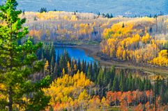 Grand Mesa Late September. Aspen, oak, and ponderosa pine. Grand Mesa in Western Colorado, is known as the world's largest flat top mountain. Over 10,000 royalty free stock photo