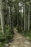 Aspen Path Images stock
